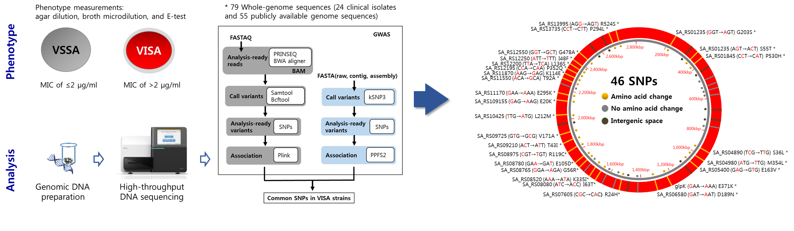 Flow diagram for genotype-phenotype association analysis (left). Overview of the mutations associated with the VISA phenotype (right).